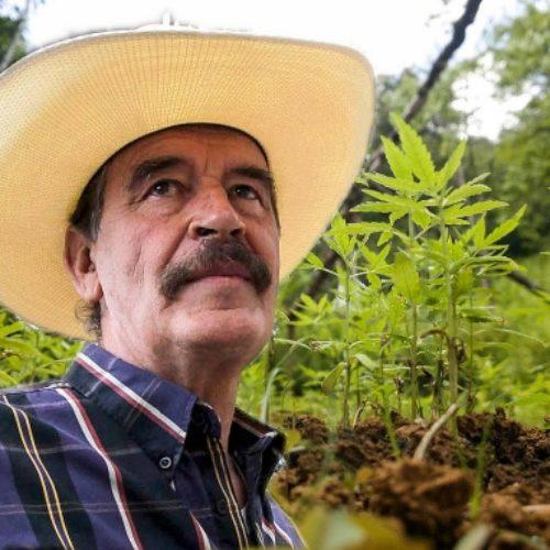 Ahora Vicente Fox es nombrado embajador de la marihuana en México