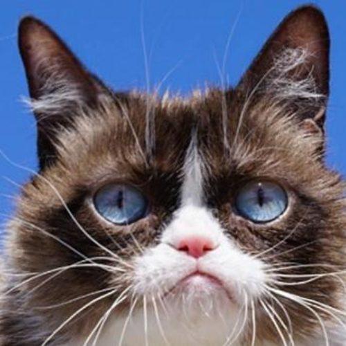 Grumpy Cat muere a los siete años